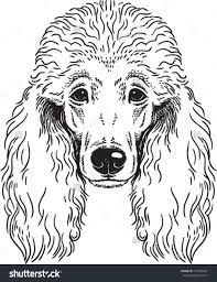 poodle drawing - Google Search
