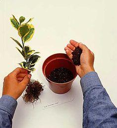 Fagyal és kecskerágó szaporítása - gazigazito.hu Floral, Garden, Flowers, Orchids Garden, Gardens, Florals, Garten, Lawn And Garden, Royal Icing Flowers