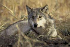Surprising Animals That May Go Extinct