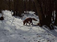 Ingo Valgma: Loomablogi Surface Mining, Limestone Quarry, Great Tit, Trail Camera, Animal Tracks, Wild Boar, Water Quality, Finland, Waterfall