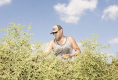 How an Extinct Bean Accidentally Made Me a Farmer