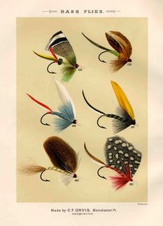 bass flies glorious fly fishing print no. 2. $12.50, via Etsy. Whole set available.