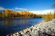 Bow River in Calgary I Am Canadian, Landscape Photos, Calgary, Bow, River, Spaces, Mountains, Nature, Arch
