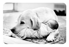 SO cute...pup snuggling newborn baby.