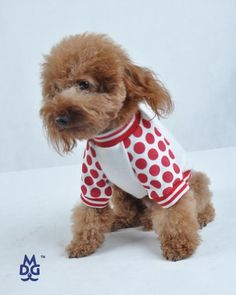 CheePet Pet Dog Outfits Dresses Clothes Shirts « Pet Lovers Ads