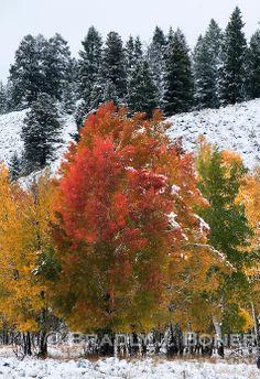 Fall colors in Grand Teton National Park (BRADLY J. BONER)