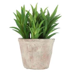 Prickly Succulent in White Wash Terra Cotta Pot