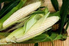 """Germ 7-14 days Royalty among white corn with exceptional eating quality. A late season variety with 8-9"""" tender ears, 14-16 rows, can grow to over 8'. 150 seeds."""