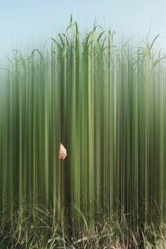 Original Garden Photography by Ellen Jantzen Motion Blur Photography, Color Photography, Creative Photography, Digital Photography, Nature Photography, Ethereal Photography, Photomontage, Art Cube, Surreal Photos
