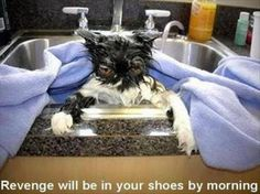 z-funny-animals-132 funny animal pictures pictures funny Animals