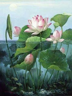 Water lily  - my sons birth month flower                                                                                                                                                     More