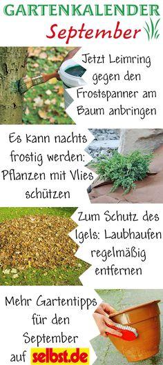 Hainbuche Hainbuchenhecke Säulenhainbuche Carpinus Betulus ... Garten Im September Pflege Tipps