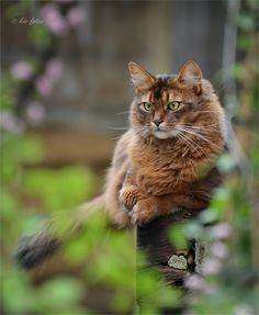 Beautiful cat reminds me of the cat i used to have Isabella