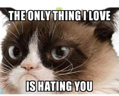 The only thing I love is hating you