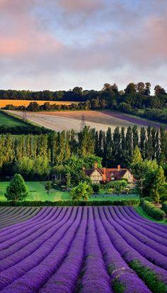 Kent, England (by Nigel Morton)