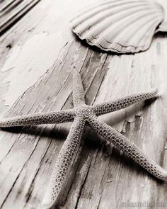 Starfish Sea Shell Black White Sepia Nautical Decor Nature Photo Macro Coastal Living Beach