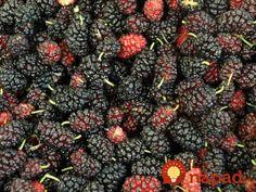 Ženy, čaj z týchto listov je zázrak, ktorý máte úplne zdarma: Zníži váhu, odstráni zápchu, bojuje proti osteoporóze a mnohé ďalšie! Blackberry, Diabetes, Fruit, Healthy, Blackberries, Health, Rich Brunette