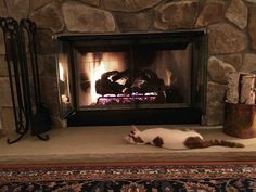 Warming his belly by the fire.