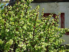 Jade Succulent, Succulent Soil, Propagating Succulents, Growing Succulents, Succulents In Containers, Planting Succulents, Hello Hello Plants, Elephant Food, Kalanchoe Blossfeldiana