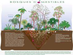 plantas bosque comestible - Buscar con Google