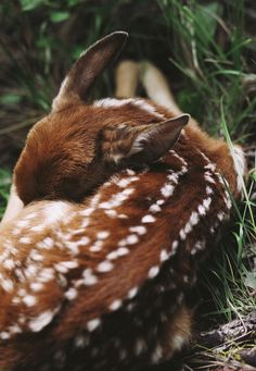 Sleeping fawn. (1) From: Girly Me, please visit...