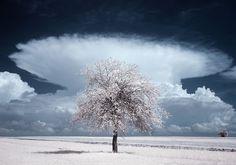 La pasmosa belleza de los árboles en la fotografía infrarroja de Przemysalw Kruk # La fotografía infrarroja es una técnica que permite fotografiar uno de los espectros lumínicos que se encuentran entre los 700 y 1200 nanómetros, que no son visibles para el ojo humano. Entre sus variadas aplicaciones …