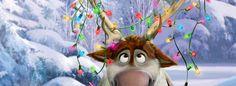 Sven tangled up in Christmas lights! hehe