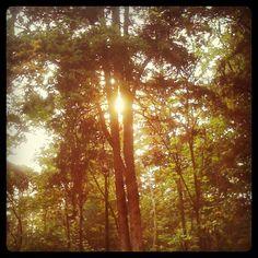 Bosque de Tlalpan, my fav place for jogging