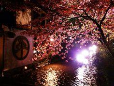 Spring. Kyoto japan.