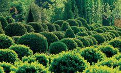 die besten 25 buchsbaum schneiden ideen auf pinterest boxwood topiary buchs schneiden und. Black Bedroom Furniture Sets. Home Design Ideas