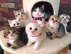 24 cutest cats and kittens - Baby Animals 2019 Cute Cats And Kittens, I Love Cats, Crazy Cats, Kittens Cutest, Animals And Pets, Baby Animals, Funny Animals, Cute Animals, Funny Cats