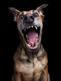 These Expressive Dog Portraits By Elke Vogelsang Will Make You Love Dogs Funny Dogs, Funny Animals, Cute Animals, Dog Photos, Dog Pictures, I Love Dogs, Cute Dogs, Dog Expressions, Animal Faces