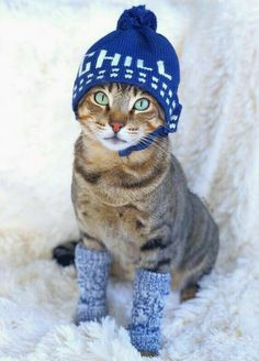 January Is National Dress Up Your Pet Day - Cutest Baby Animals Cute Cats And Kittens, I Love Cats, Crazy Cats, Cool Cats, Kittens Cutest, Costume Chat, Cat Costumes, Funny Costumes, Baby Animals