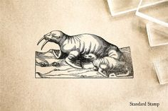 Vintage Walrus Rubber Stamp - 2 x 2 inches