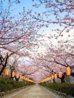 Kamakura | Japan | Sakura | Springs