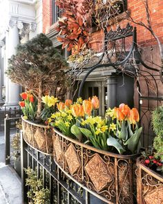 """Susan Kaufman on Instagram: """"Some delightful daffodils and tulips to help usher in April. These planters in front of Alta restaurant always have the prettiest displays.…"""" Daffodils, Tulips, Planters, Nyc, Restaurant, Display, Pretty, Instagram, Twist Restaurant"""