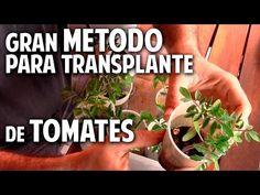 A que no conocias este método para transplantar los tomates cherry @cosasdeljardin - YouTube