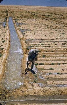 Ancient.Egypt.Series.Liberation.Province.irrigation.Brake.Brian.jpg (410×640)
