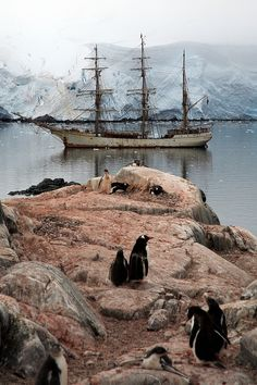 Port Lockroy, Antarctica. This picture just makes me smile. So Beautiful