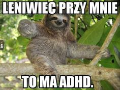 Close Reading Grade Non Fiction Passages: Rainforest Animals Funny Shit, Funny Dog Memes, Funny Signs, The Funny, Sloth Memes, Funny Stuff, Funny Animals With Captions, Funny Animal Pictures, Sid The Sloth