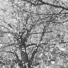 #Granada #otoño