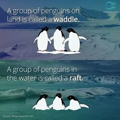 Waddle, raft, whatever! They're all okay with me!