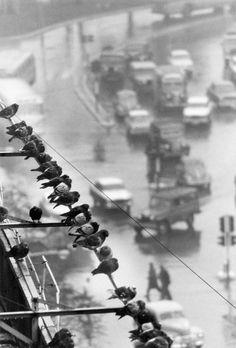 André Kertész :: 9 de Julio Avenue, Buenos Aires, 1962 / more [+] by this photographer