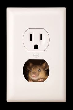 """Photo: James Brey/Getty 