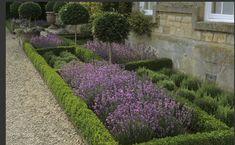 boxwood & lavender