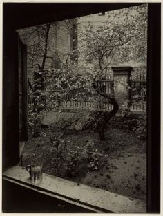 "last-picture-show: ""Josef Sudek, The Window of my Studio - Spring in my Garden, Prague, 1954 "" Vintage Photography, Street Photography, Art Photography, Classic Photography, Photography Articles, Fashion Photography, Prague, Josef Sudek, Art Gallery Of Ontario"