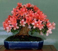 ●☼I simply love this beautiful #bonsai.☼☼       #BonsaiInspiration