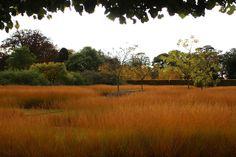 Scampston walled garden in Malton, North Yorkshire, designed by Piet Oudolf.  Drifts of Grass - Molinia caerulea ssp caerulea 'Poul Peterson'