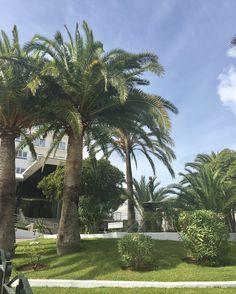 Hieman ihasteltavaa hortonomeille🌴🌵🌸🌺🌼 #kukkia #palmuja #agave #mehikasvi #bougainvilleas #munloma #tjäreborg #mallorca #majorca #mallis