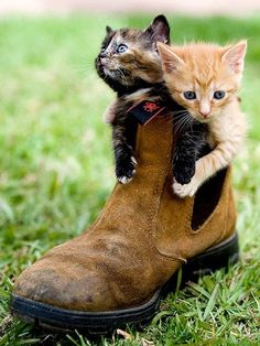 2 puss in boots! How lovely!